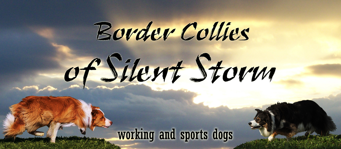 Border Collies of Silent Storm
